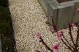 white-pebble-20mm-garden