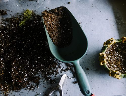Tips for Using Local Organic Compost