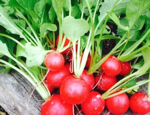 PH Test your Vegetable Garden Soil